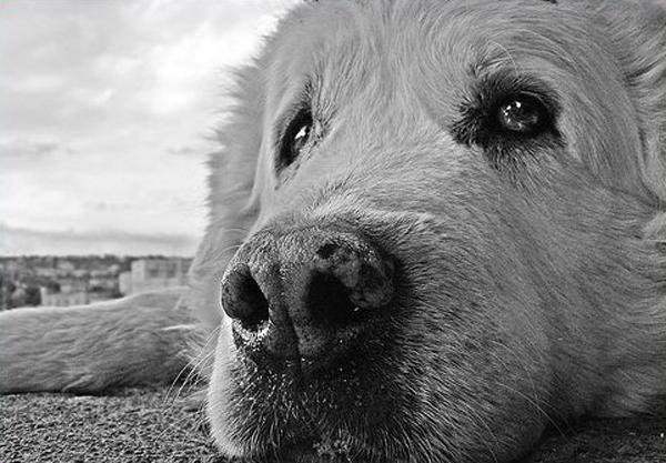 divieto assoluto di utilizzo di animali randagi ai fini scientifici o sperimentali