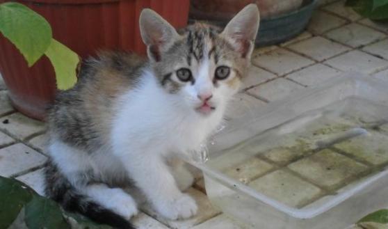 Gattini da adottare a Pescara