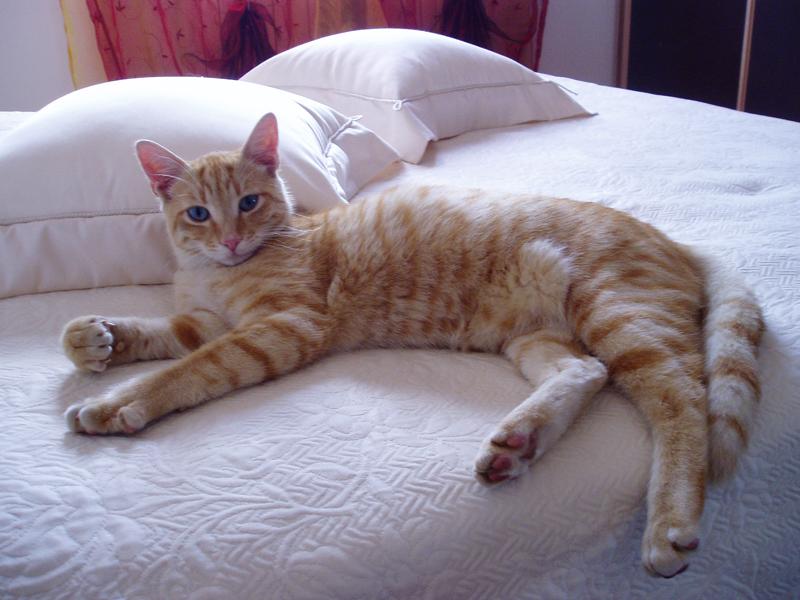 Lettiera per gatti meglio la sabbia - Gatto pipi letto ...