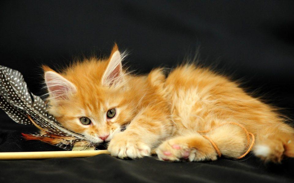 giochi-per-gatti