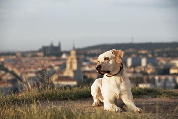 cani-in-città