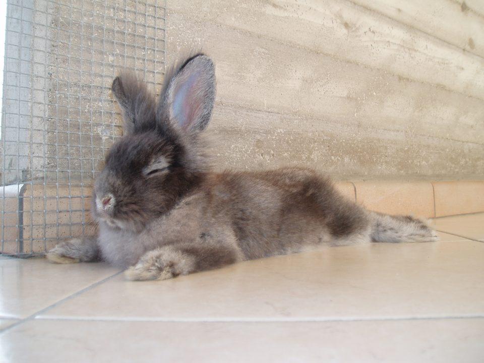 Il coniglio dell'amico di QZlife Andrea Venturi