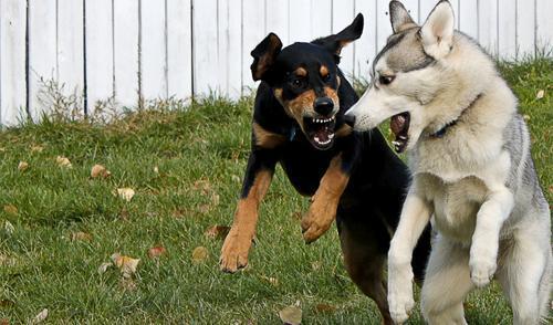 cane-aggressivo-con-cane