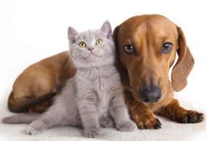 convivenza-cane-e-gatto