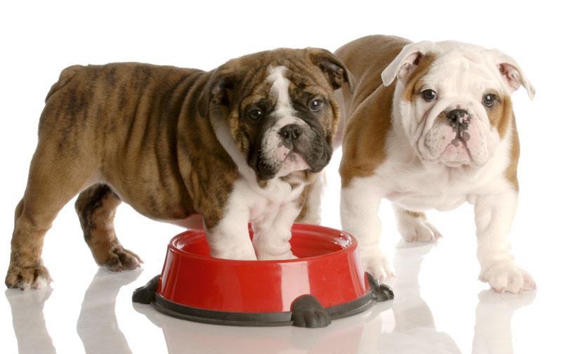 Risultati immagini per cane che mangia