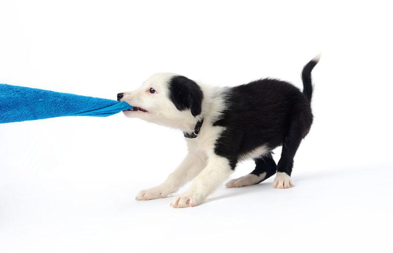 cane-che-mordiccchia