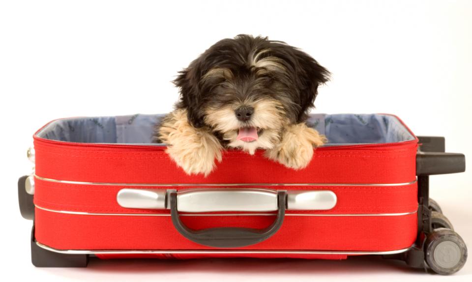 viaggiare-con-cane