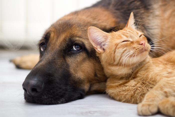 Risultati immagini per cane e gatto