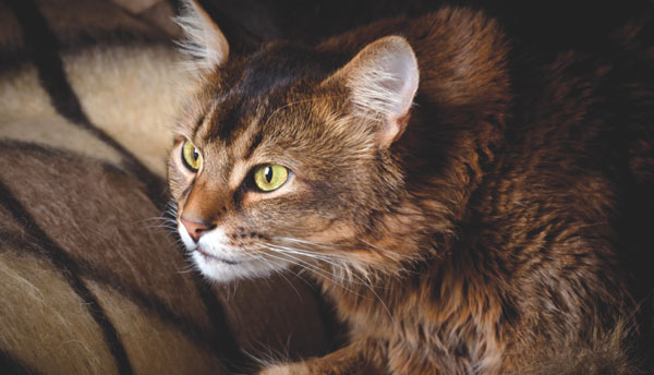 Come Avvicinarsi Ad Un Gatto Spaventato Quattro Zampe