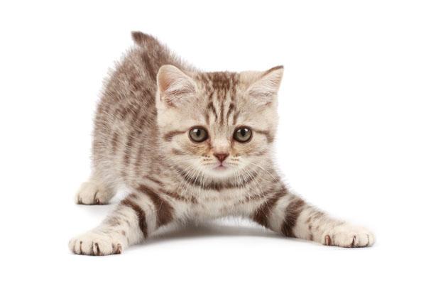 comunicazione-gatto