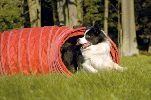 attività-fisica-cane