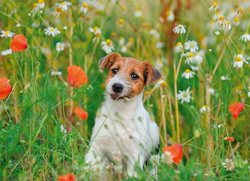 antiparassitario-cani
