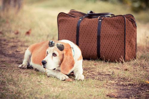 la-valigia-del-cane