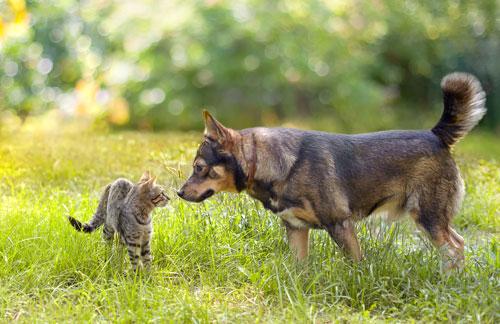 conoscenza-cane-gatto