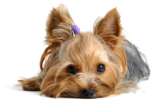 deiezione-cane