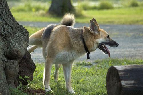 deiezioni-cane