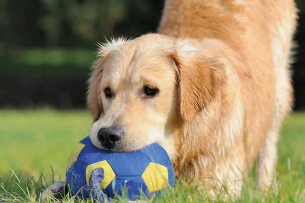 giocattoli-cani