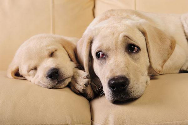 Quando in casa arriva il secondo cane quattro zampe for Cani da tenere in casa
