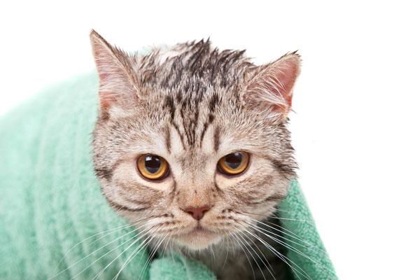 Come fare il bagno al gatto quattro zampe - Fare il bagno al gatto ...