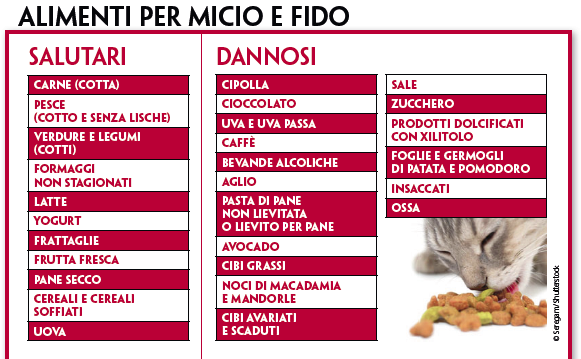 Alimenti-per-cane-e-gatto
