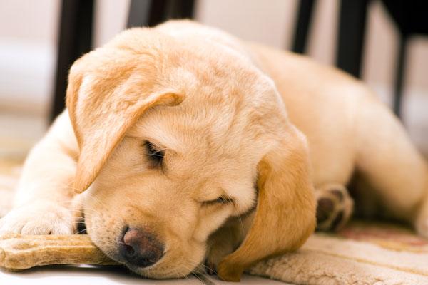 Popolare Alimentazione di cane e gatto: a proposito di quantità  MT25