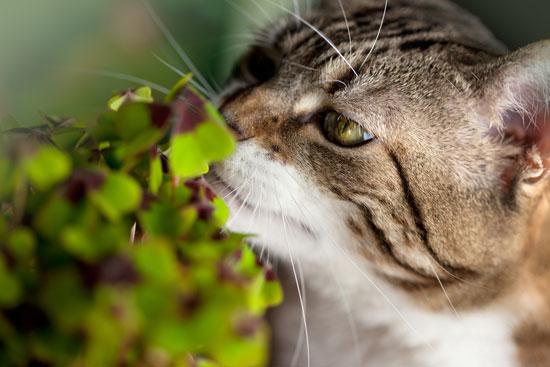 gatto-e-pianta
