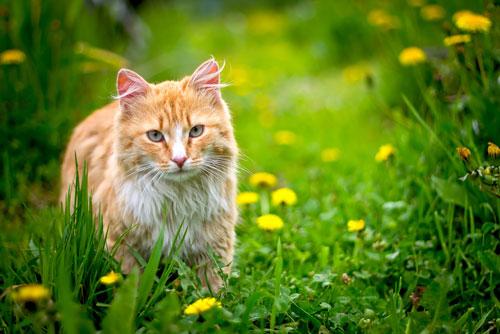 gatto-randagio