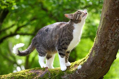 gatto-volante
