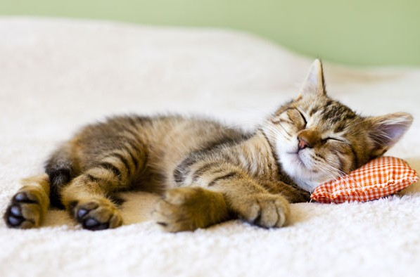 casa-cat-friendly