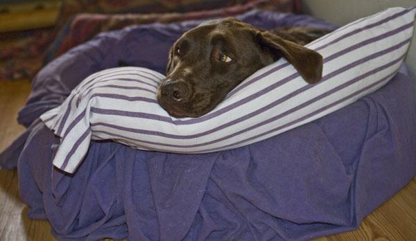 dove-dorme-il-cane