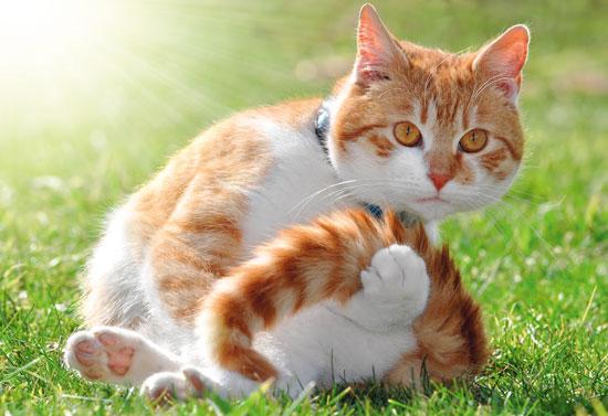 Risultati immagini per gatto contento
