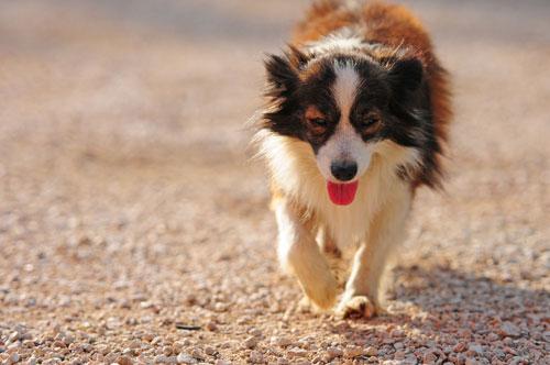 cane-in-strada