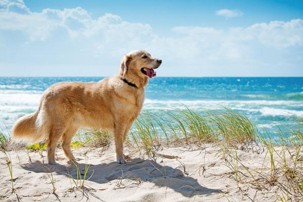 Risultati immagini per cane d'estate