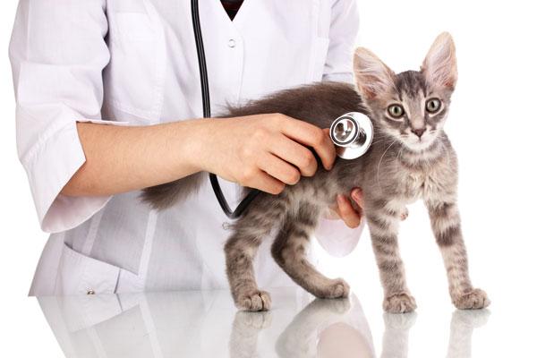 vaccini-gatto
