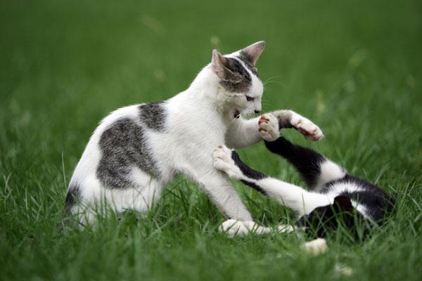 convivenza-difficile-gatti