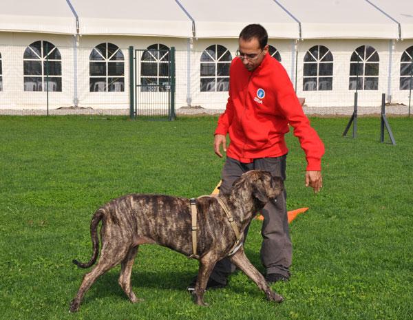 età-evolutiva-cane