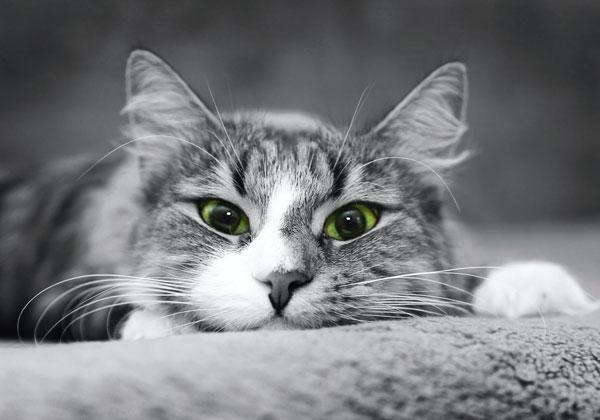 gatto-intossicato