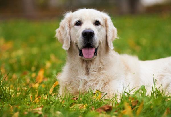 cane-nel-prato