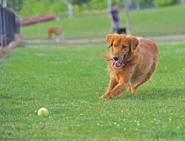 sport-cani