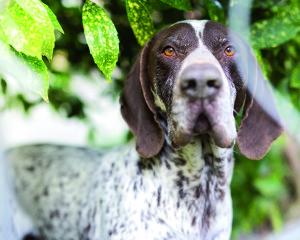 cane del mese 2_shutterstock_401977078