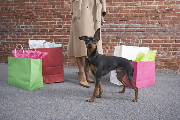 shopping-con-il-cane