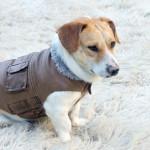 cappottini-per-cani