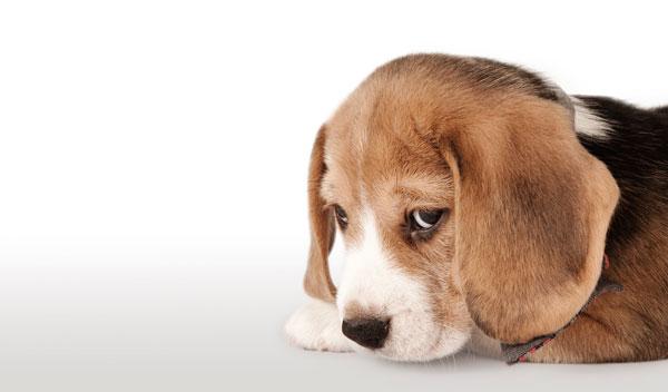 scegliere-un-cane