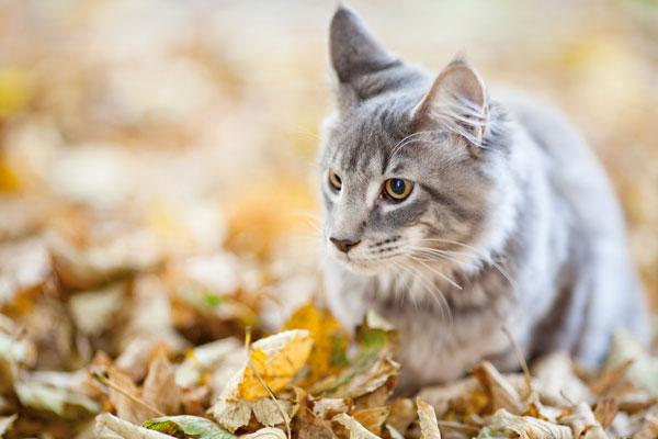 ipertiroidismo-gatti