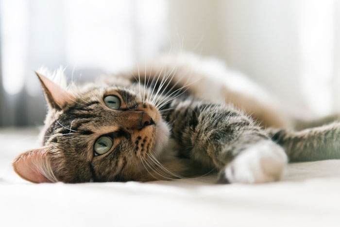 Giornata del gatto a Brescia