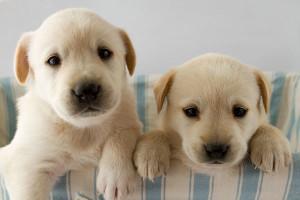 vendite-di-cuccioli