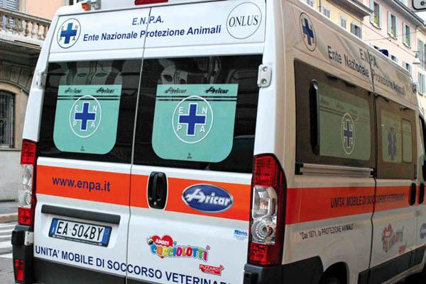 Isotta, l'unità mobile di soccorso veterinario
