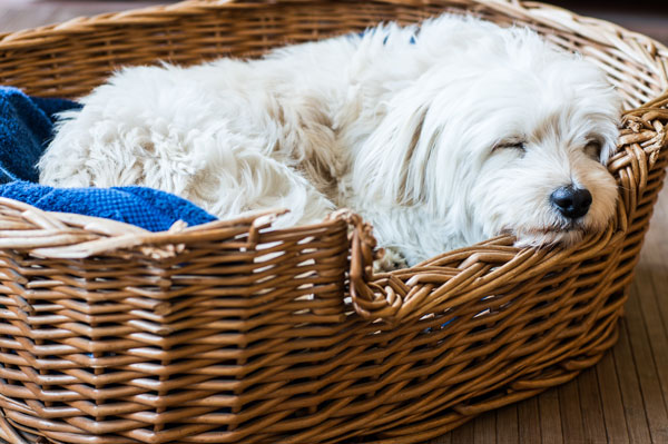 dove-deve-dormire-il-cane