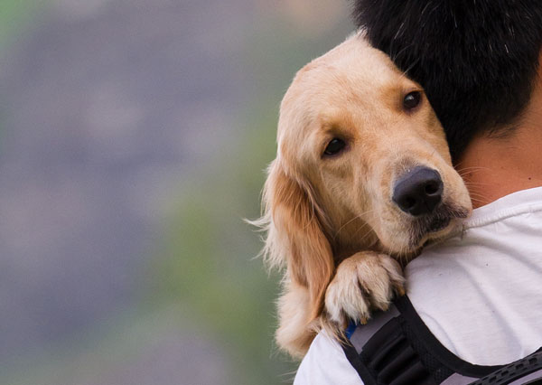 leggi-tutela-animali