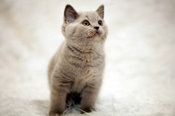 Gatto che miagola di notte quattro zampe for Cosa mangia il gatto